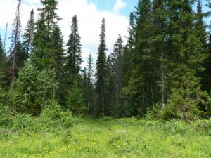 лес близ Катавки