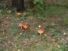 Мухоморчики ) грибов толком и не нашли