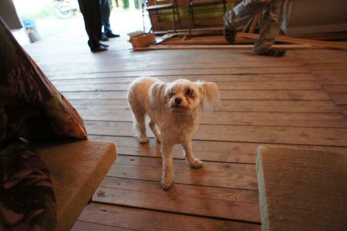 Забавная собака в кафе Луговое