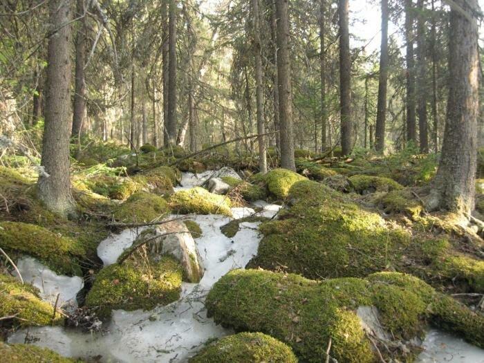 Лес на Иремеле